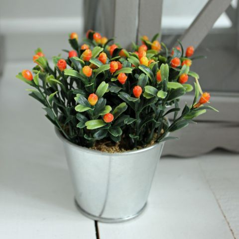Orange flower bud in Tin Pot