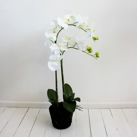 Small Orchid Plant