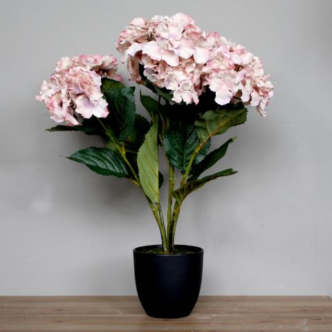 HYDRANGEA POT - DIRTY PINK